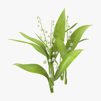 Lily of the Valley - Natural group