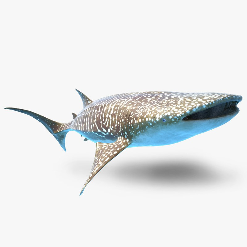 rigged whale shark 3d max