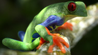 Tree frog high quality