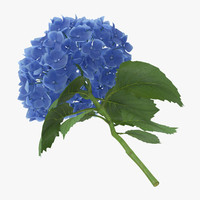 single laying hydrangea - obj