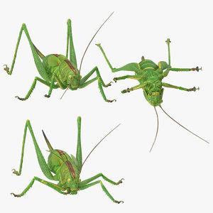 grasshopper poses 3d model