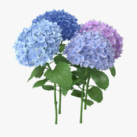 Hydrangeas - Natural Group