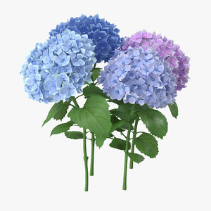 hydrangeas natural group - 3d max