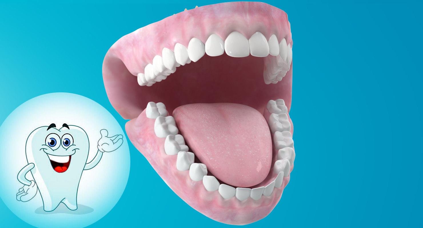 dentition anatomy medicine 3d model