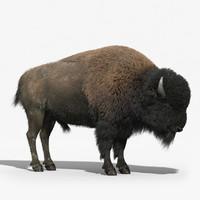 Bison(FUR)