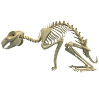 3d rabbit skeleton animal model