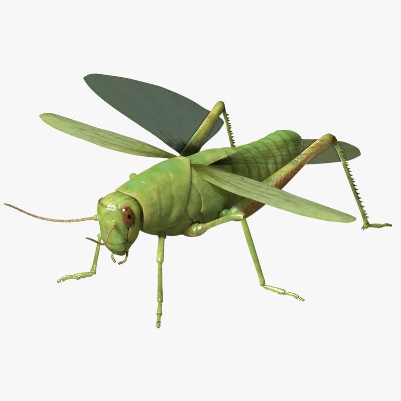 grasshopper arnold 3d model