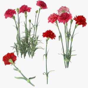 carnation 3d c4d