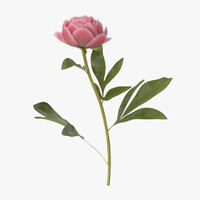 3d model of single standing peony -