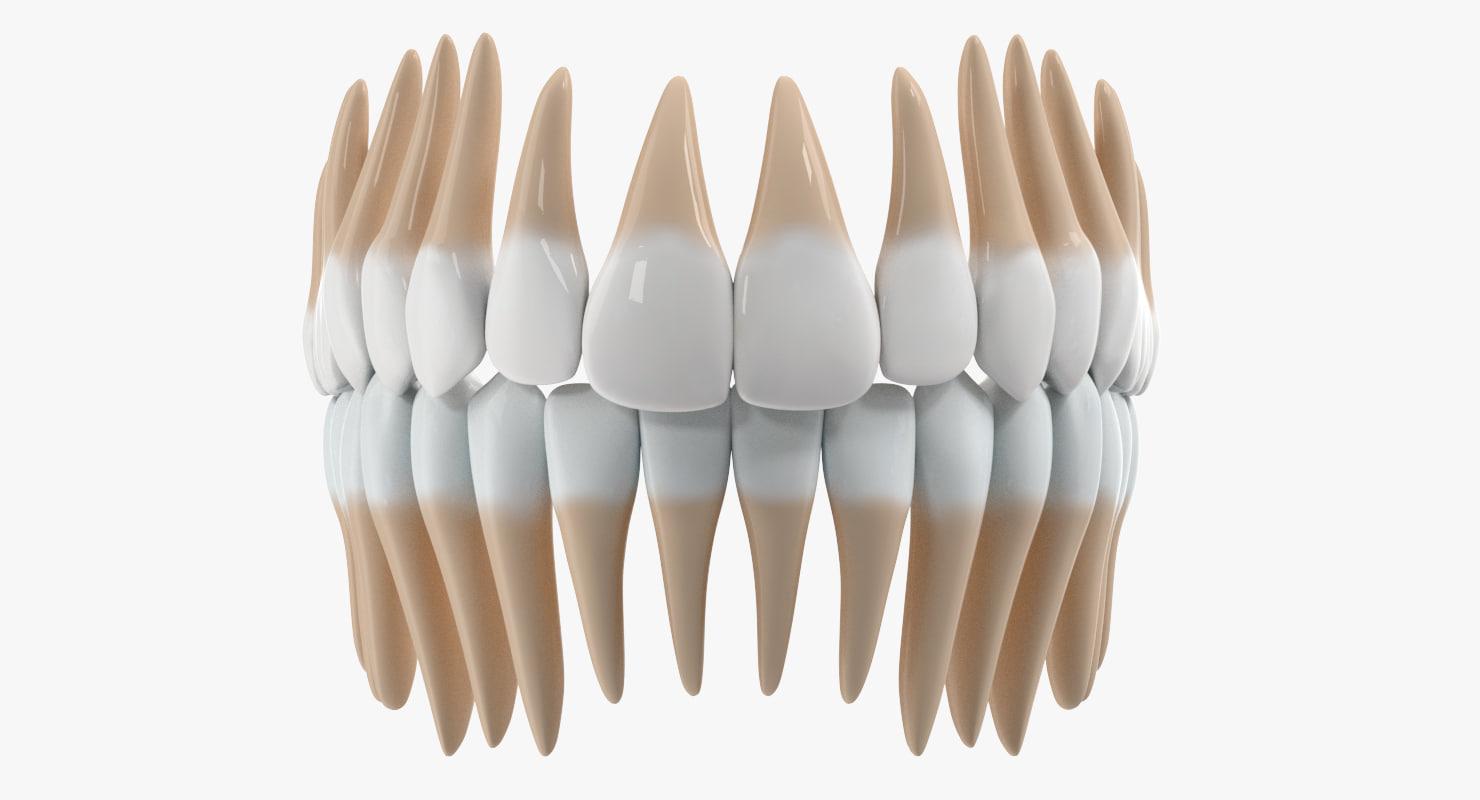 teeth anatomy dxf
