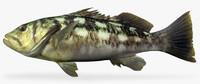 kelp bass 3d model