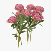 peony natural group - 3d model