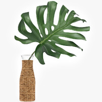Monstera Leaves 002