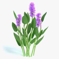 3d purple pickerel rush flowers model