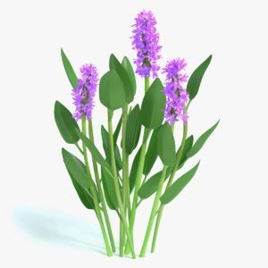 3d purple pickerel rush flowers model
