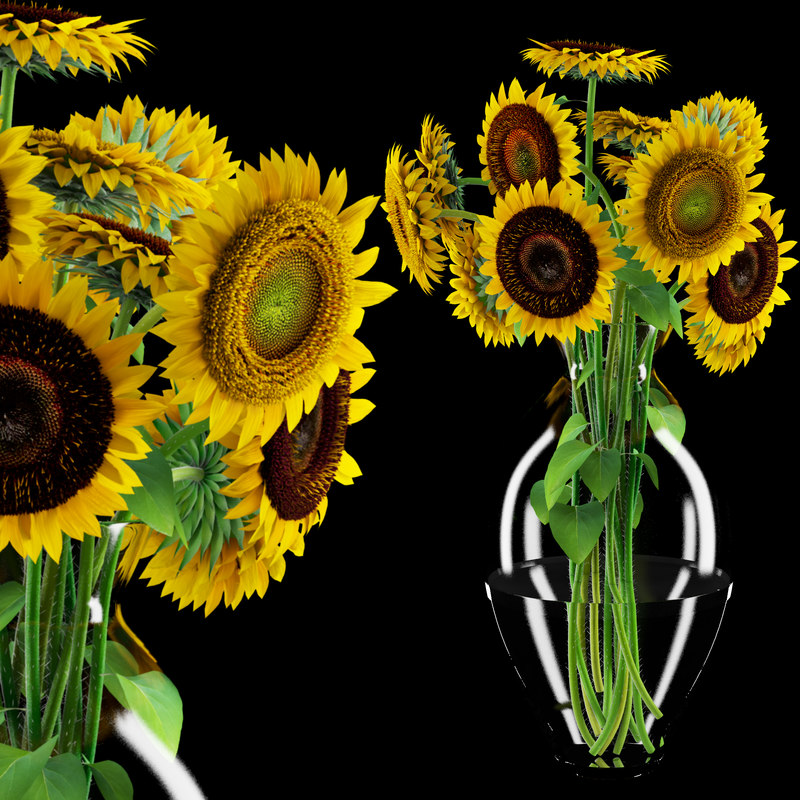 3d sunflower flower