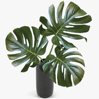 Monstera Leaves 003