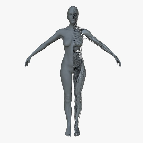 ultimate female anatomy project ma