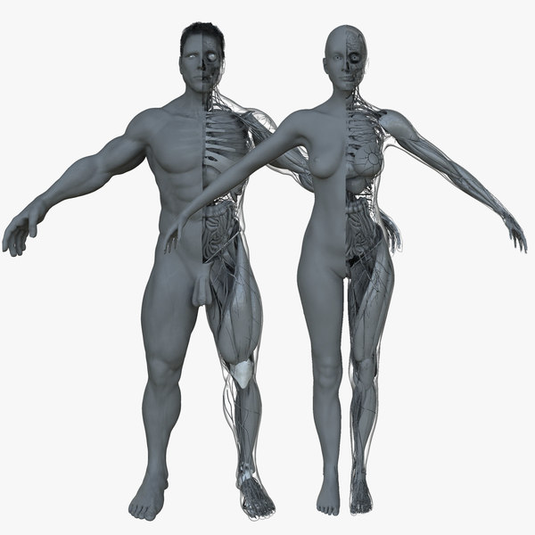 ultimate project combo female anatomy 3d ma
