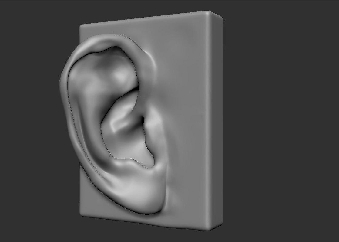 3d model of head parts ear