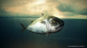 3d realistic fish