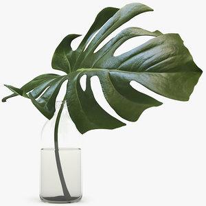 3d monstera leaves