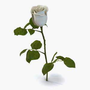 rose 2 white 3d max