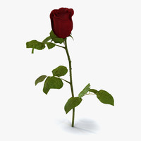 Rose 2 3D Model