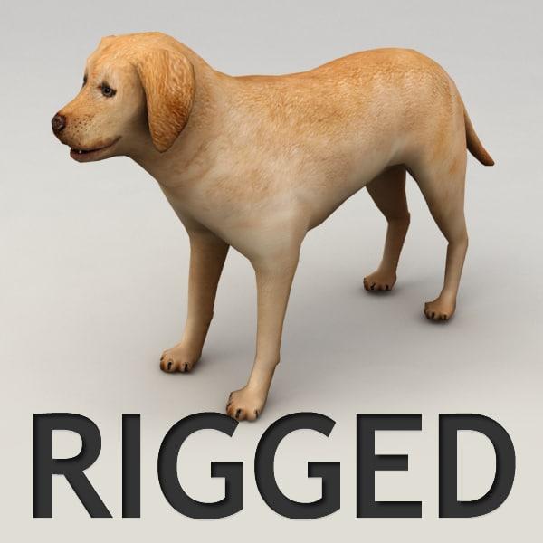 rigged labrador ma