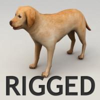 Labrador rigged