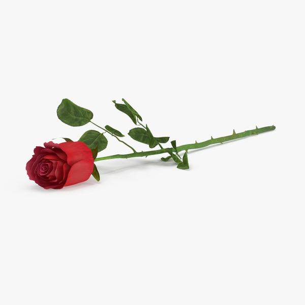 rose laying max