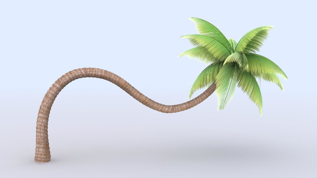 palm tree beach 3d x
