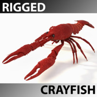 Crayfish Rigged
