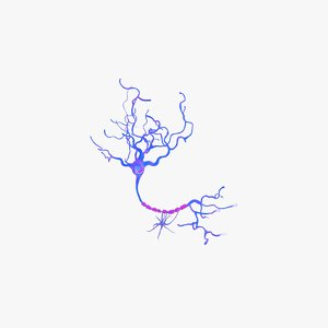 neuron cell 3d model