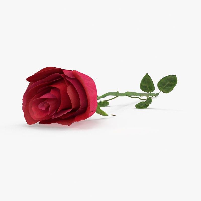 3d laying rose