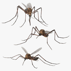 3d mosquito 3 poses