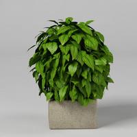 3d max plant bush