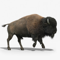american bison fur animation 3d max