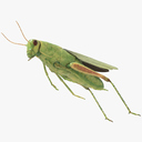 Grasshopper 3D models