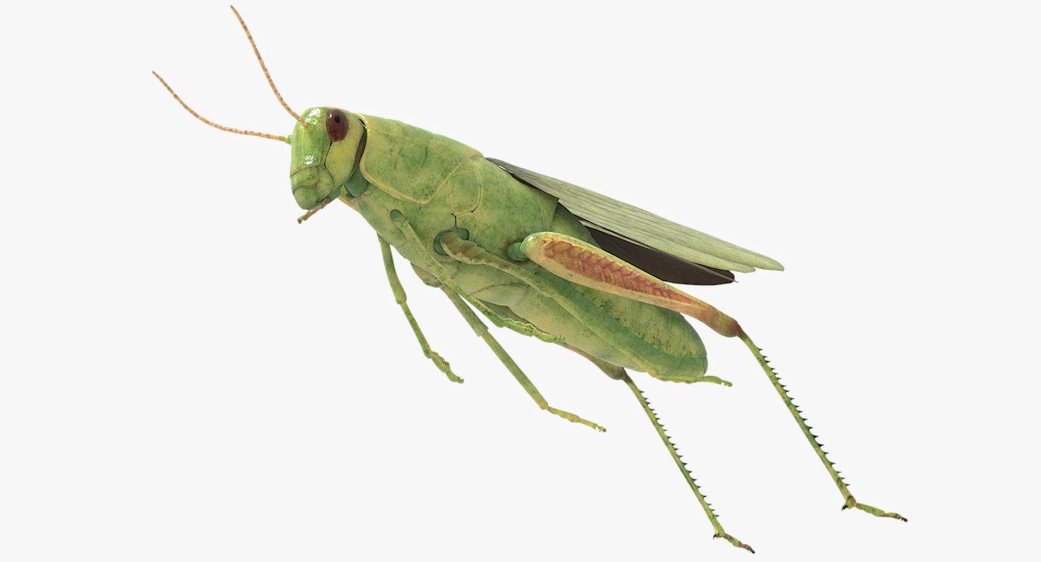 rigged grasshopper obj
