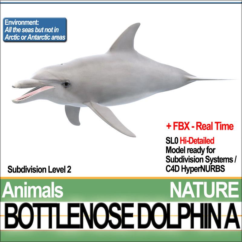 3d bottlenose dolphin model