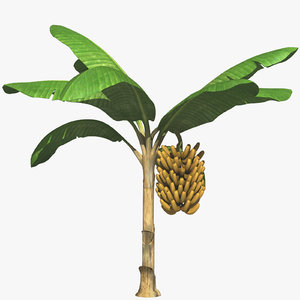 banana plant tree obj