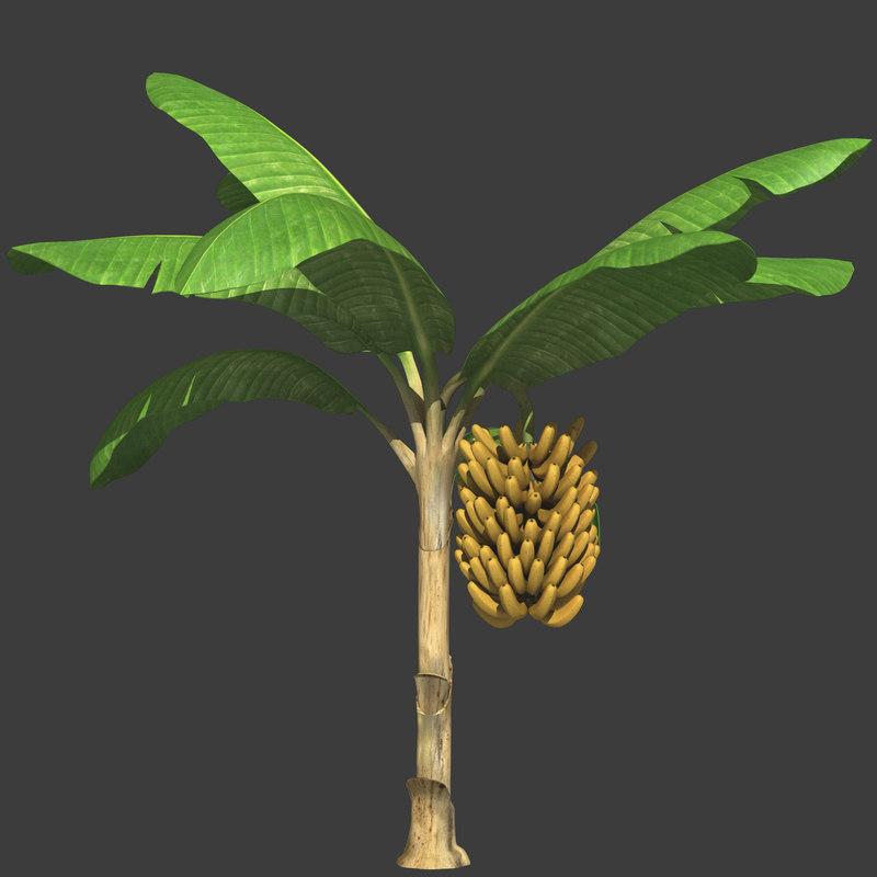 banana plant tree obj