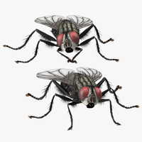 3d model house fly poses