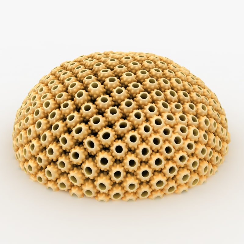 3d model astreopora coral yellow