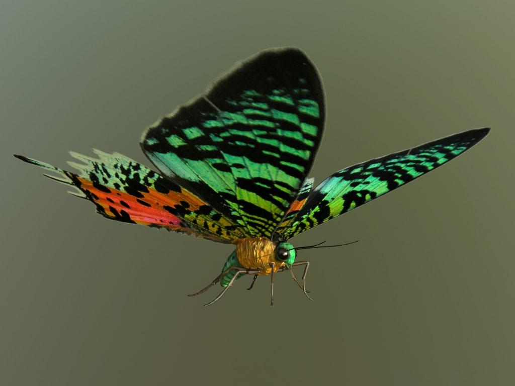 3d obj madagascan sunset moth