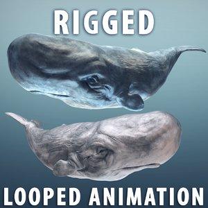 sperm whale 2 blue 3d max