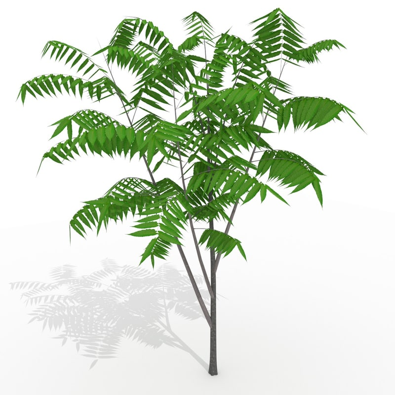 3d obj sumac tree