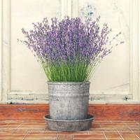 Purple flowers in metal bucket
