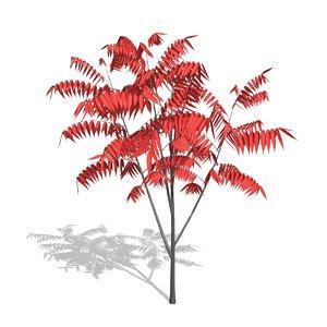 sumac tree 3d c4d